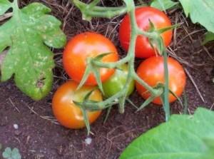 organic vitamins for erectile dysfunctio