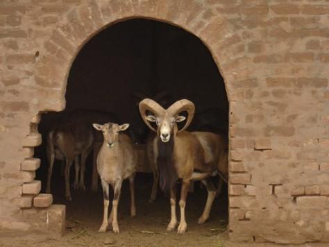 Horny goat weed erectile dysfunction