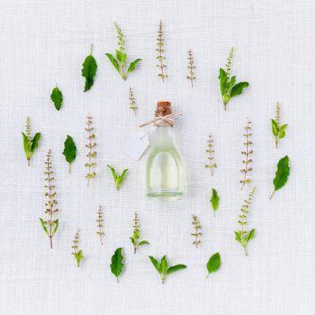 Herbs that increase dopamine