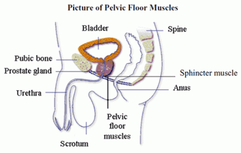 Exercises for Erectile Dysfunction