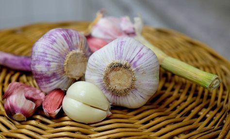 Best Garlic Supplement Review