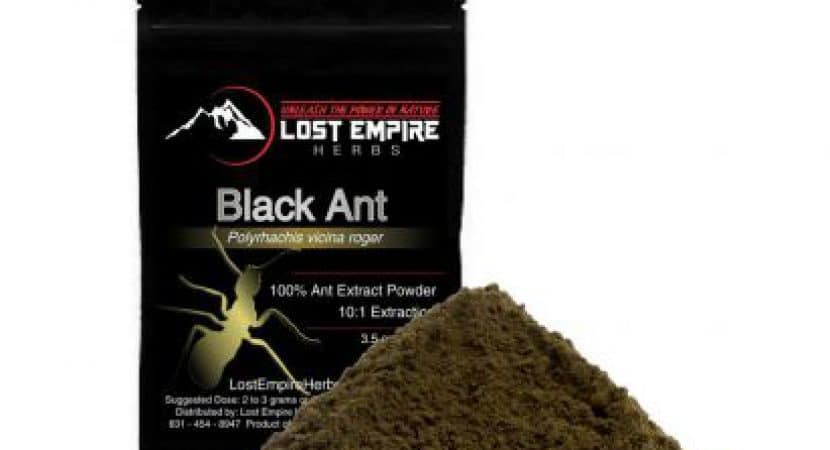 Polyrhachis Ant Extract