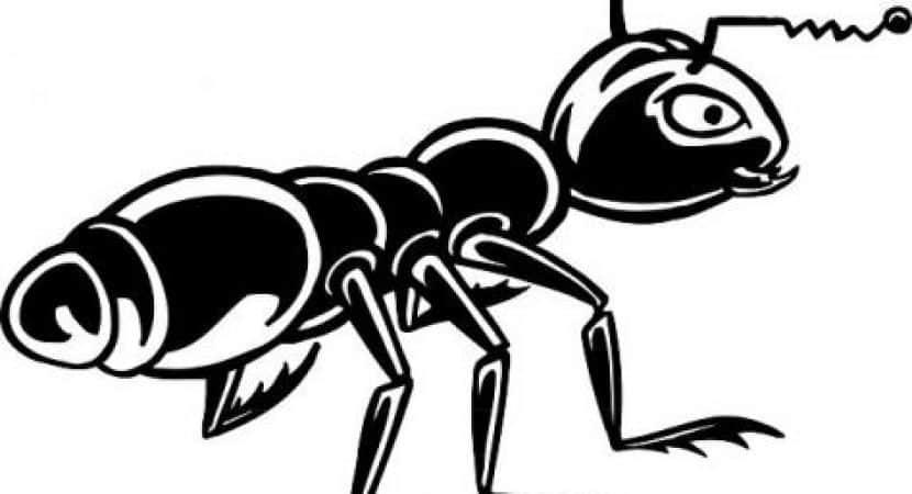 black ant extract benefits