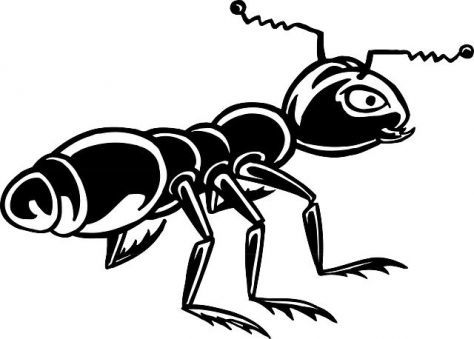 black ant extract benefits