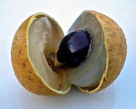 Longan Berry