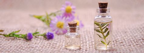 Blue Vervain Medicinal Uses Featured