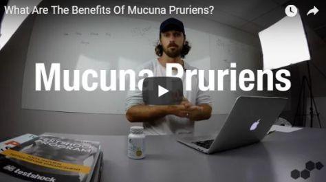 Buy Mucuna Pruriens